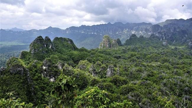 Lukisan gua ini terletak di Gua Karst di Semenanjung Sangkulirang-Mangkalihat, Kalimantan Timur. Sebuah wilayah yang sangat sulit dijangkau. (Arkenas/Pindi Setiawan)