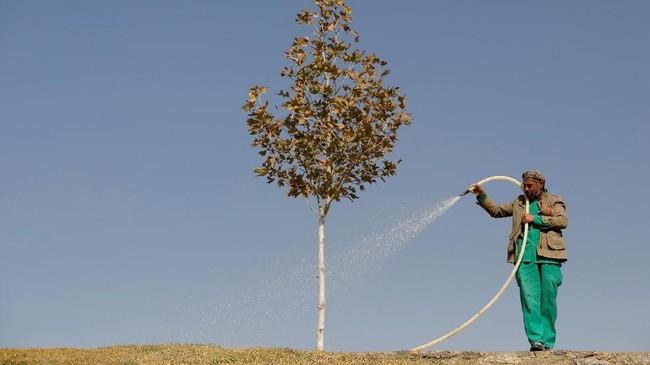 Seorang pekerja pemerintah kota menyemprotkan air pada pohon di kota Kabul, Afghanistan. (REUTERS/Mohammad Ismail)
