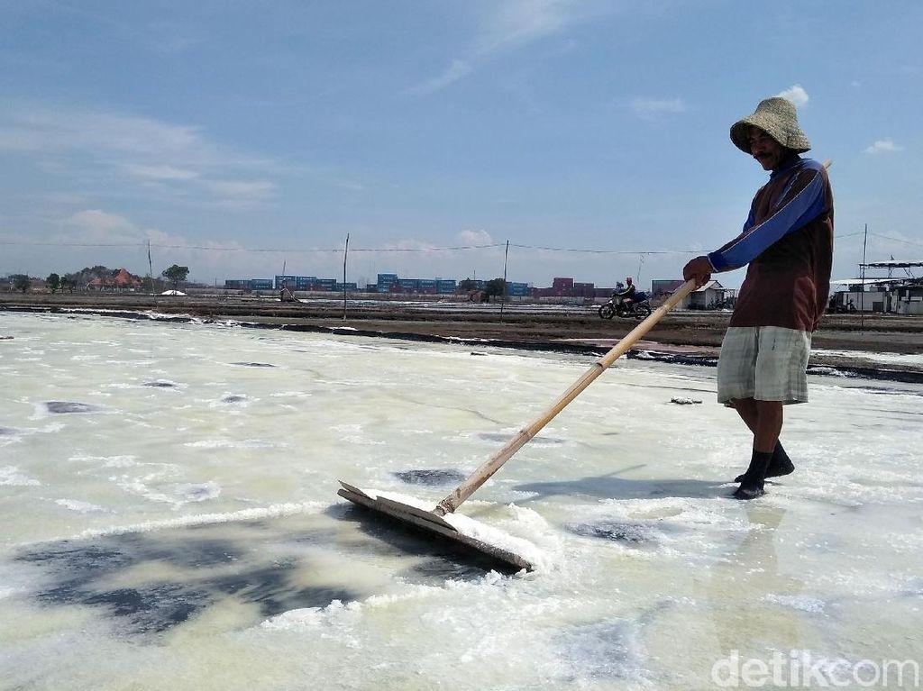 Petani Garam Surabaya Curhat Pendapatan Berkurang