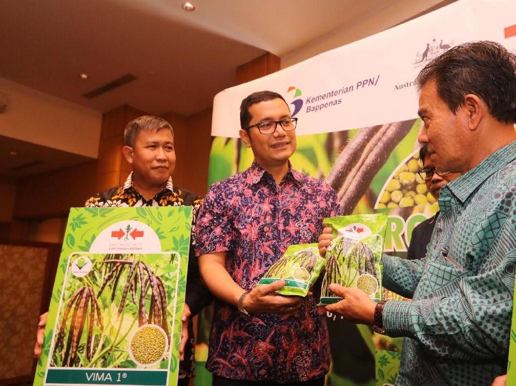 Benih kacang hijau varietas VIMA 1, merupakan hasil seleksi dari Balai Penelitian Tanaman Aneka Kacang dan Umbi (BALITKABI) yang dikukuhkan melalui MoU antara EWINDO dan Badan Litbang Kementerian Pertanian. Istimewa.
