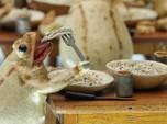 Mengunjungi Museum Katak di Swiss