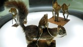 Kodok-kodok yang diawetkan itu juga dibuat seperti tengah mengendarai tupai (REUTERS/Denis Balibouse)