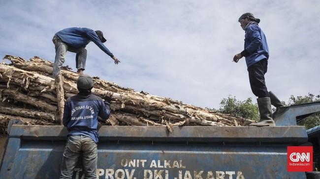 Sudin Sumber Daya Air Jakarta Utara juga mempersiapkan 3.000 batang kayu dolken untuk menanggulangi tanggul-tanggul yang jebol. (CNN Indonesia/ Hesti Rika)