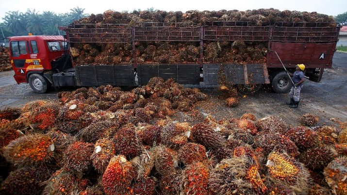 FILE PHOTO: A worker unloads palm oil fruits from a lorry inside a palm oil factory in Salak Tinggi, outside Kuala Lumpur August 4, 2014.   REUTERS/Samsul Said/File Photo