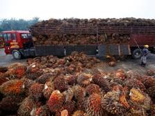 Pungutan Ekspor CPO Dinolkan, Industri Terima Kasih ke Jokowi