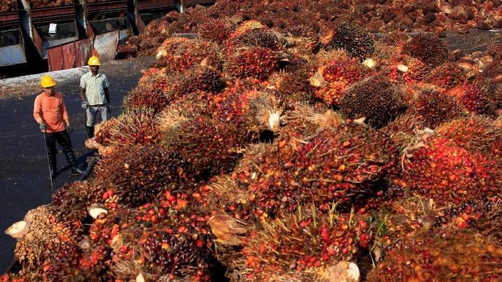 Pernyataan Pemerintah Soal Pungutan Ekspor CPO Dinolkan