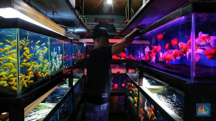 Warna-warni Ikan Hias dan Peluang Bisnis Bagi Pecinta Ikan