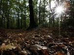 Ekspor Hasil Hutan Rp 173 T, Siti Nurbaya: Itu Belum Maksimal