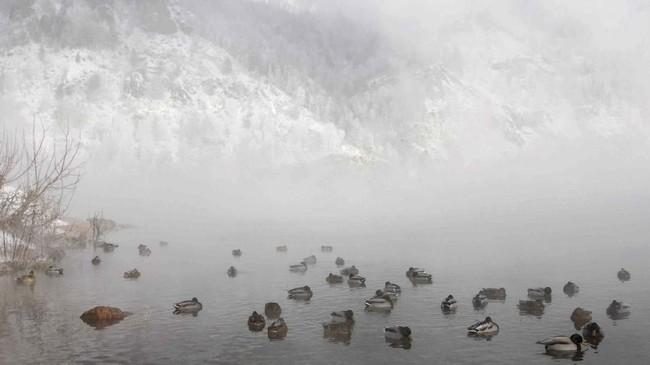 Sekawanan bebek liar berenang saat temperatur akhir musim gugur sudah mencapai minus 20 derajat Celciusdi Sungai Yenisei, di wilayah Taiga Siberia di luar Taiga, Rusia. (Reuters/Ilya Naymushin)