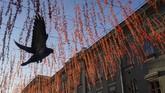 Seekor merpati terbang di bawah siluet jalan pada suatu pagi di Moskow, Rusia. (Reuters/Shamil Zhumatov)
