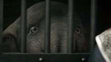 Sedihnya 'Dumbo' Berpisah dengan Sang Ibu di Trailer Baru