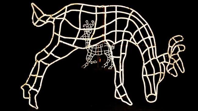 Sebuah objek bercahaya yang dibentuk seperti rusa, menghiasi acara natal di taman.