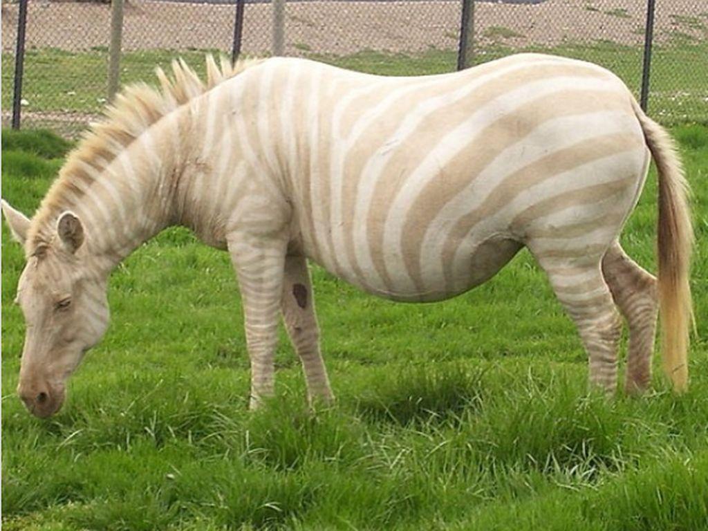 Potret Langka Hewan Albino yang Mengagumkan