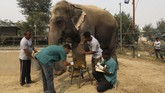 Tengok saja Asha, seekor gajah berusia 49 tahun, yang meletakkan kaki kirinya di bangku dokter yang mengobati lukanya. Ia diserbu pengunjung yang beramai-ramai mencoba mendokumentasikannya. (REUTERS/Anushree Fadnavis)