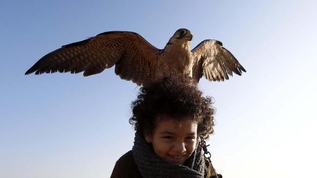 550+ Gambar Burung Elang Peliharaan HD Terbaik