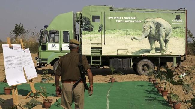 India baru saja membuka rumah sakit gajah untuk pertama kalinya. Rumah sakit itu berdiri di Mathura, negara bagian Uttar Pradesh. (REUTERS/Anushree Fadnavis)