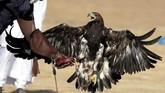 Burung Elang menjadi hewan peliharaan favorit penduduk Mesir, karena mereka percaya bahwa burung bermata tajam itu merupakan titisan Dewa Horus.