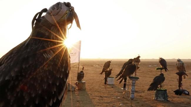 Hari Burung Elang Sedunia pada 17 November juga dirayakan di Mesir, tepatnya berpusat di Borg al-Arab, Alexandria, Kairo.