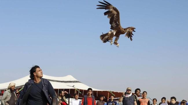 Seorang anggota EGY Falconer Clubmelepas Burung Elang peliharaannya ke langit lepas.