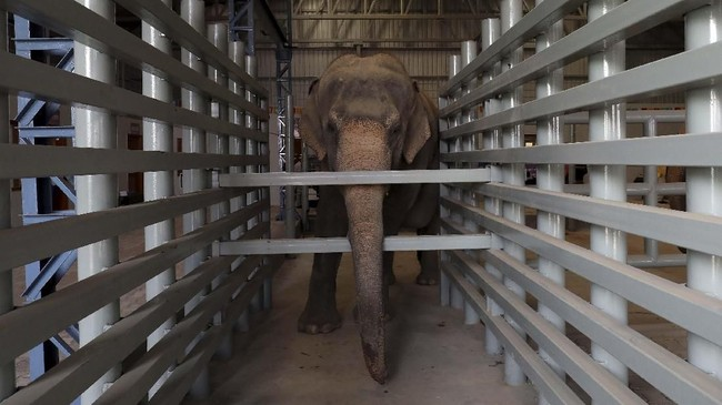 Rumah sakit ini berdiri di tepi Sungai Yamuna, berdekatan dengan lahan konservasi yang menjadi rumah bagi sekitar 22 gajah.(REUTERS/Anushree Fadnavis)