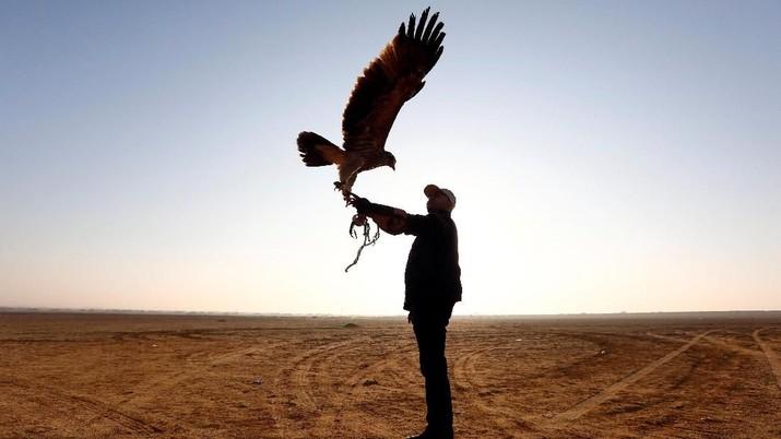 Warga Mesir Lakukan Tradisi Berburu dengan Elang