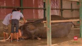 VIDEO: Rumah Sakit Khusus Gajah Dibangun di India