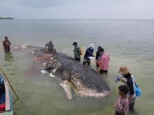 Kematian Paus Wakatobi & Ketidakjelasan Rencana Cukai Plastik