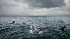 Turis AS Tewas Diterkam Hiu Saat Berenang di Hawaii