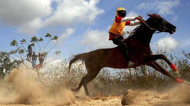 Joki beradu kecepatan saat mengikuti lomba pacuan kuda tradisional di Desa Kalimporo, Jeneponto, Sulawesi Selatan.