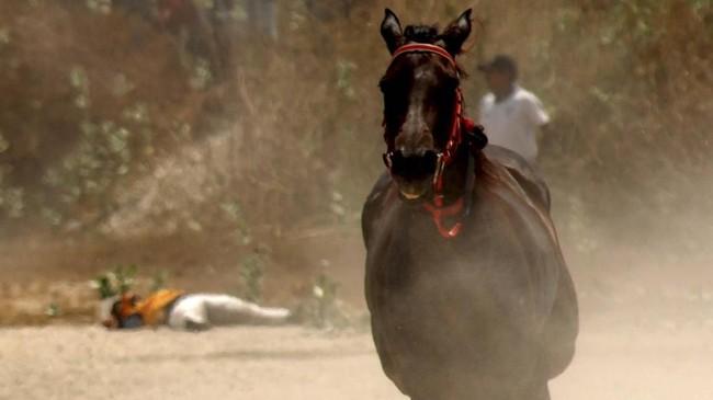 Seorang Joki terjatuh saat mengikuti lomba pacuan kuda tradisional.