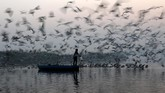 Pada hari yang baru saja dimulai, seorang pria memberi makan burung camar di sungai Yamuna, New Delhi, India. (REUTERS/Anushree Fadnavis)