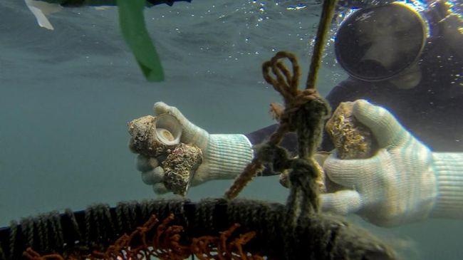Kisah Ama, Nenek Penyelam di Perairan Jepang