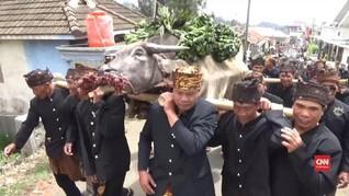 VIDEO: Warga Suku Tengger Gelar Ritual Unan-Unan