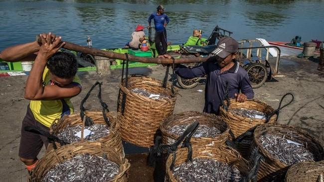 Pekerja memikul hasil tangkapan ikan teri dari nelayan bagan apung di Pelabuhan Perikanan Pantai Morodemak, Bonang, Demak, Jawa Tengah. (ANTARA FOTO/Aji Styawan)