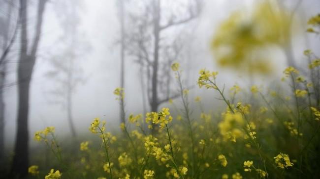 Bunga liar yang tumbuh di Alas Lali Jiwo.