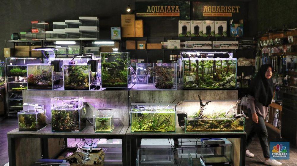 Pengunjung melihat Aquarium Landscape atau Aquascape di Lenteng Agung, Jakarta Selatan, Selasa (27/11/2018). Sejarah aquascape sendiri diperkenalkan oleh jepang pada tahun 1990 oleh Takashi amano. (CNBC Indonesia/Andrean Kristianto)