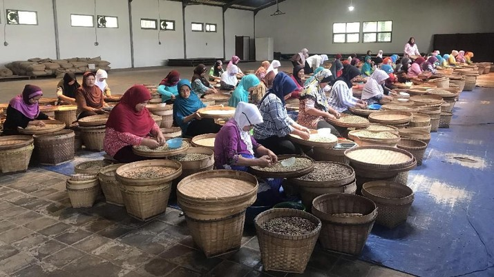 Kampoeng Kopi Banaran yang masih bertahan diantara pabrik-pabrik kopi modern yang semakin menjamur di Indonesia.