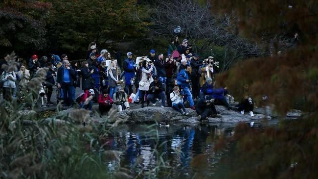 Segerombolan orang melihat dari dekat Bebek Mandarin di Central Park. (Eduardo Munoz Alvarez/Getty Images/AFP)