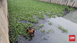 Pemkot Jakut Uji Coba Eceng Gondok untuk Bersihkan Air Sungai