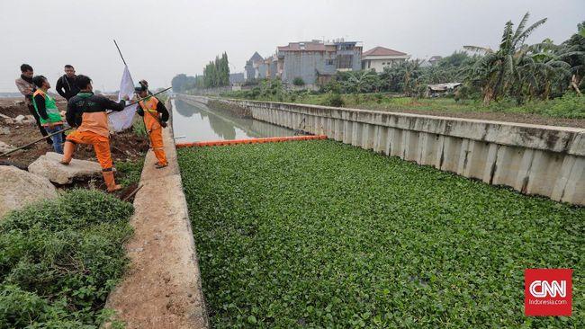 Alasan DKI Uji Coba Eceng Gondok untuk Jernihkan Air Sungai
