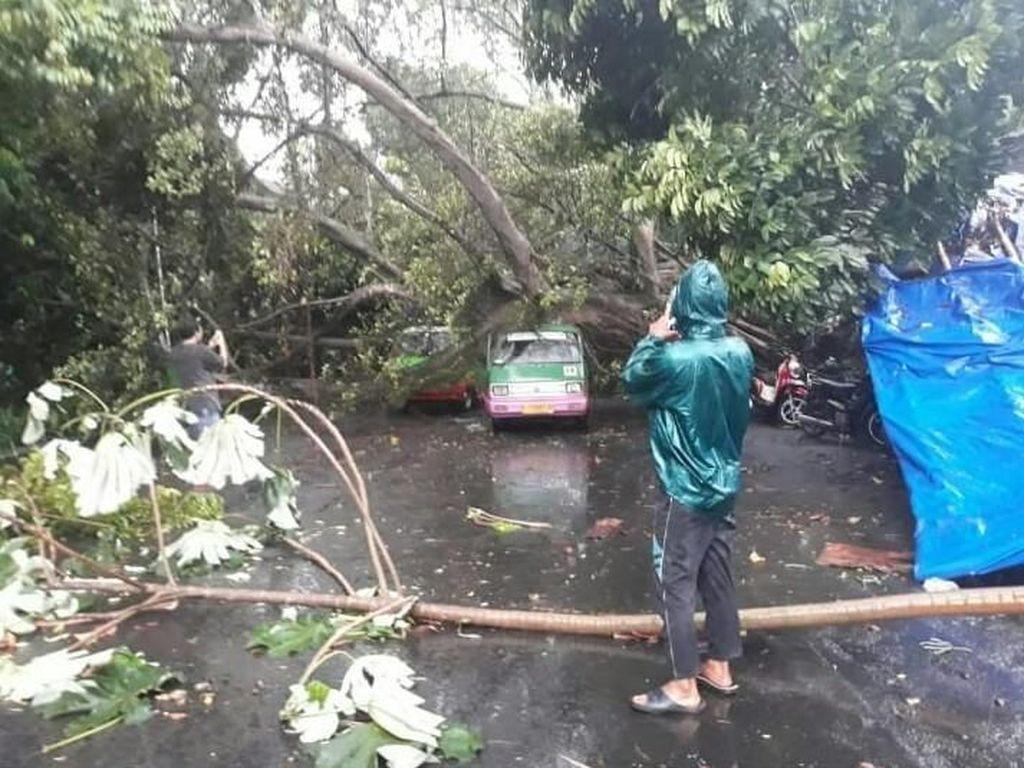Sejumlah pohon di Bogor tumbang dan menimpa kendaraan. Peristiwa ini disebabkan hujan lebat disertai puting beliung. (Foto: dok. BNPB)