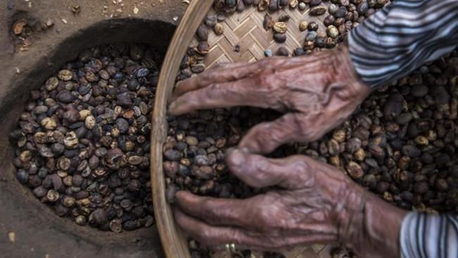 Saat ini Sahnawi secara mandiri anak-anaknya dan pemuda setempat untuk meneruskan dan mencintai kopi dengan mengajarkannya memasak, mengemas, menjual secara daring serta membuka edukasi wisata pengolahan kopi. (ANTARA FOTO/M Agung Rajasa)
