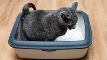 China Sukses Kloning Kucing, Kesamaan Fisik Capai 90 Persen