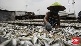 KKP Usul Diskon Pajak 30 Persen untuk Pengolahan Ikan