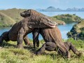 Polemik Taman Nasional Komodo Dikhawatirkan Bikin Lesu Wisata