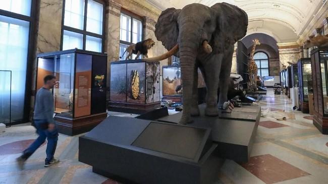 Seorang pria melewati gajah Afrika yang menjadi bagian dari Museum Afrika di Tervuren, Belgia, pada 6 Desember 2018. (REUTERS/Yves Herman)