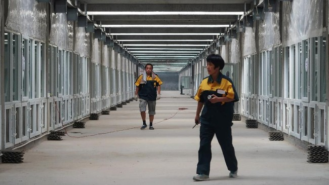 Sel-sel di pabrik pengolahan limbah Shandong Qiaobin Agricultural Technology Co tempat tinggal satu miliar kecoak untuk memakan sampah dapur dari masyarakat Kota Shandong. (REUTERS/Thomas Suen)