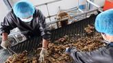 Sampah makanan ini disalurkan melalui pipa ke sel-sel kecoak. Kecoak dianggap sebagai bio-teknologi untuk mengubah dan memproses sampah dapur. (REUTERS/Thomas Suen)