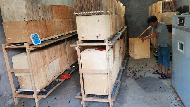 Salah satu peternak kecoak di Sichuan, Li Bingcai yang memiliki 3,4 juta kecoak. Li menjual kecoaknya ke peternakan babi dan ikan sebagai pakan dan kepada perusahaan obat. (REUTERS/Thomas Suen)
