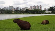 Curitiba, Kota Modern di Brasil yang Terancam 'Punah'